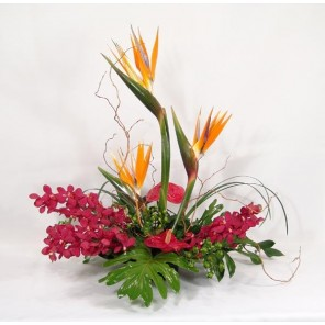 Bird of Paradise with Antherium and Orchids with Curly Accents - PF54