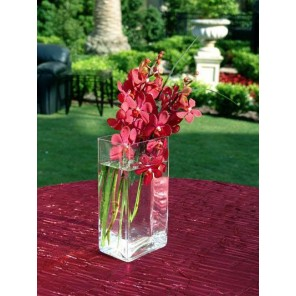 Orchids in Sleek Glass Vase - PF55