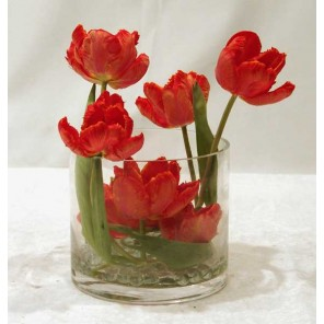 Tulips in Low Glass Cylinder - PF48